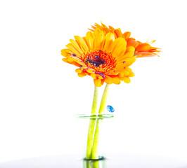 Blumen mt Wassertropfen