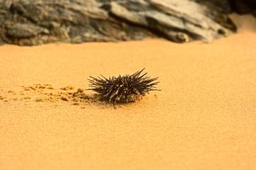 A sea urchin in a rock pool.