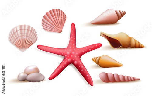 Fototapeta Set of Realistic Colorful Sea Shells and Stones