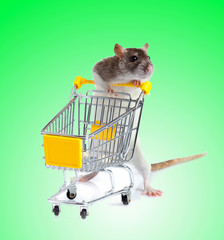 Rat with shopping cart  on green background.  concept for pet sh