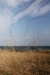 Champs de graminées face à l'océan.