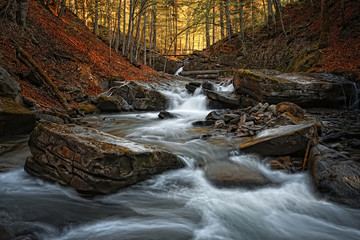 Autumn Forest With Creek