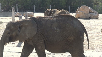 elephant from the zoo goes back
