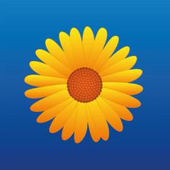 Yellow Flower Aster