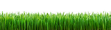 perfect grass isolated for spring border poster