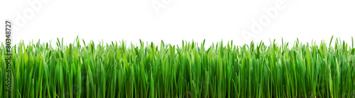 Foto op Plexiglas Planten perfect grass isolated for spring border