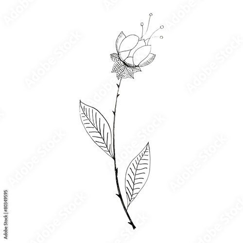 Black and white flower on a white background