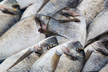 Fresh fishes in a sea market