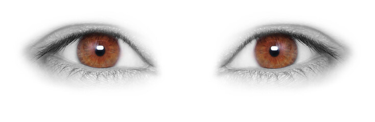 Brown eyes isolated on white background