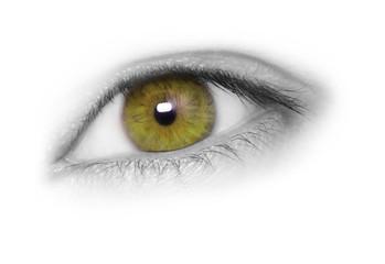 Hazel eye, isolated on white background.