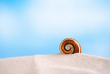 bright polymita shells on white beach sand under the sun light