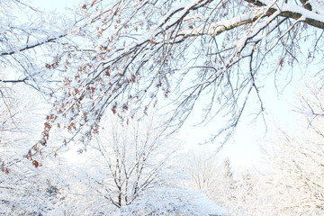beautiful snow covered tree winter landscape