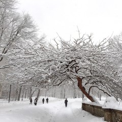 Central Park in the winter, NYC