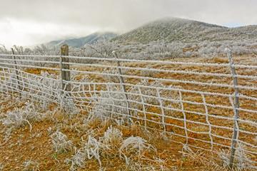 Texas Desert in a Winter Ice Storm