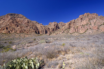 Desert Panorama in the Early Spring