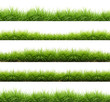 fresh spring green grass isolated - 80356559