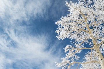 Looking up at a snow tree