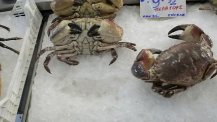 Fresh seafood, steady cam 2