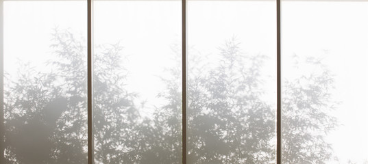 Plants shadows through window