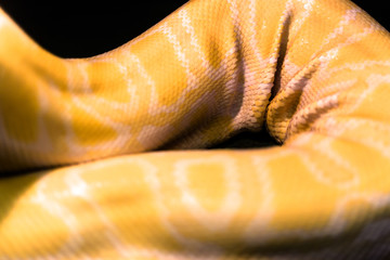 Yellow pyton leather folds
