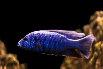 Fish on black background