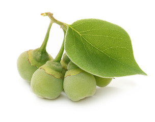 Green fruit with leaf isolated