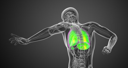 3d rendered illustration of the male respiratort system
