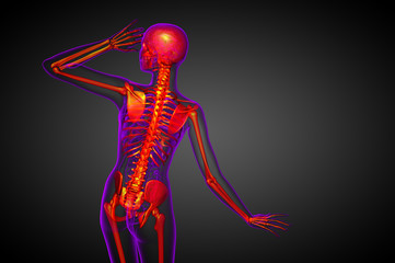 3d render medical illustration of the skeleton bone