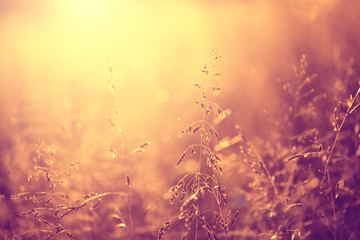 Beautiful vintage color meadow background