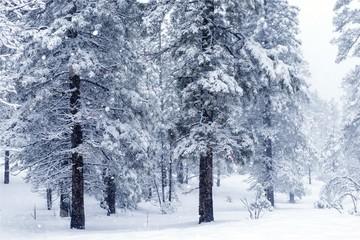 Forest Under Heavy Snow
