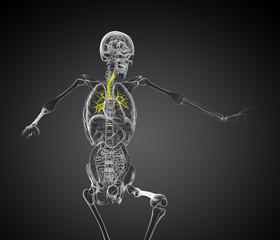 3d render medical 3d illustration of the bronchi