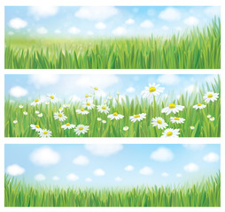 Vector summer landscapes, blue sky , meadow and chamomiles.