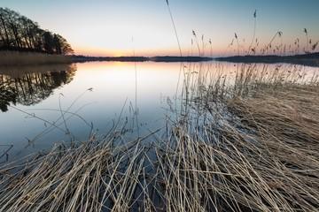 Lake landscape with reeds
