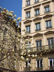 Magnolia en fleurs - Théatre des Célestin LYON 18
