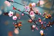 Spring flowering Japanese tree Sakura - 80382971