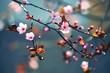Leinwanddruck Bild - Spring flowering Japanese tree Sakura