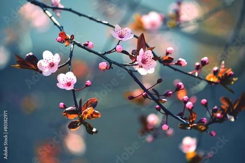 Fotobehang Bomen Spring flowering Japanese tree Sakura