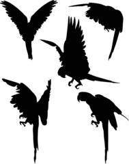 six black macaw silhouettes collection