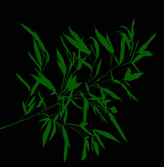 green bamboo branch on black background