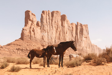 Horses in the Monument Valley