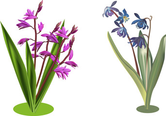 two groups of wild pink and blue flowers isolated on white