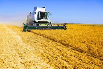 Harvester. Combine harvester harvesting wheat on sunny summer