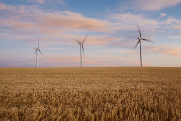 Wind turbines at dusk in a field of summer wheat. Energy production.
