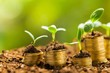 Growth. Golden coins in soil with young plant isolated. Tilt - 80388752