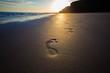 footprints Homo sapiens , people  in the sand - 80388790