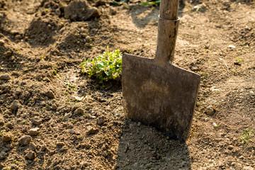 Shovel in the garden