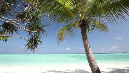 Palm trees over tropical lagoon with white beach