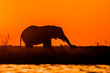 canvas print picture - Elephant at Sunset