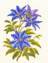 Цветы клематиса, живопись, вариант 3.