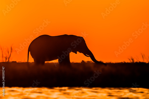 canvas print picture Elephant at Sunset